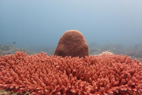 Koraal Bonaire
