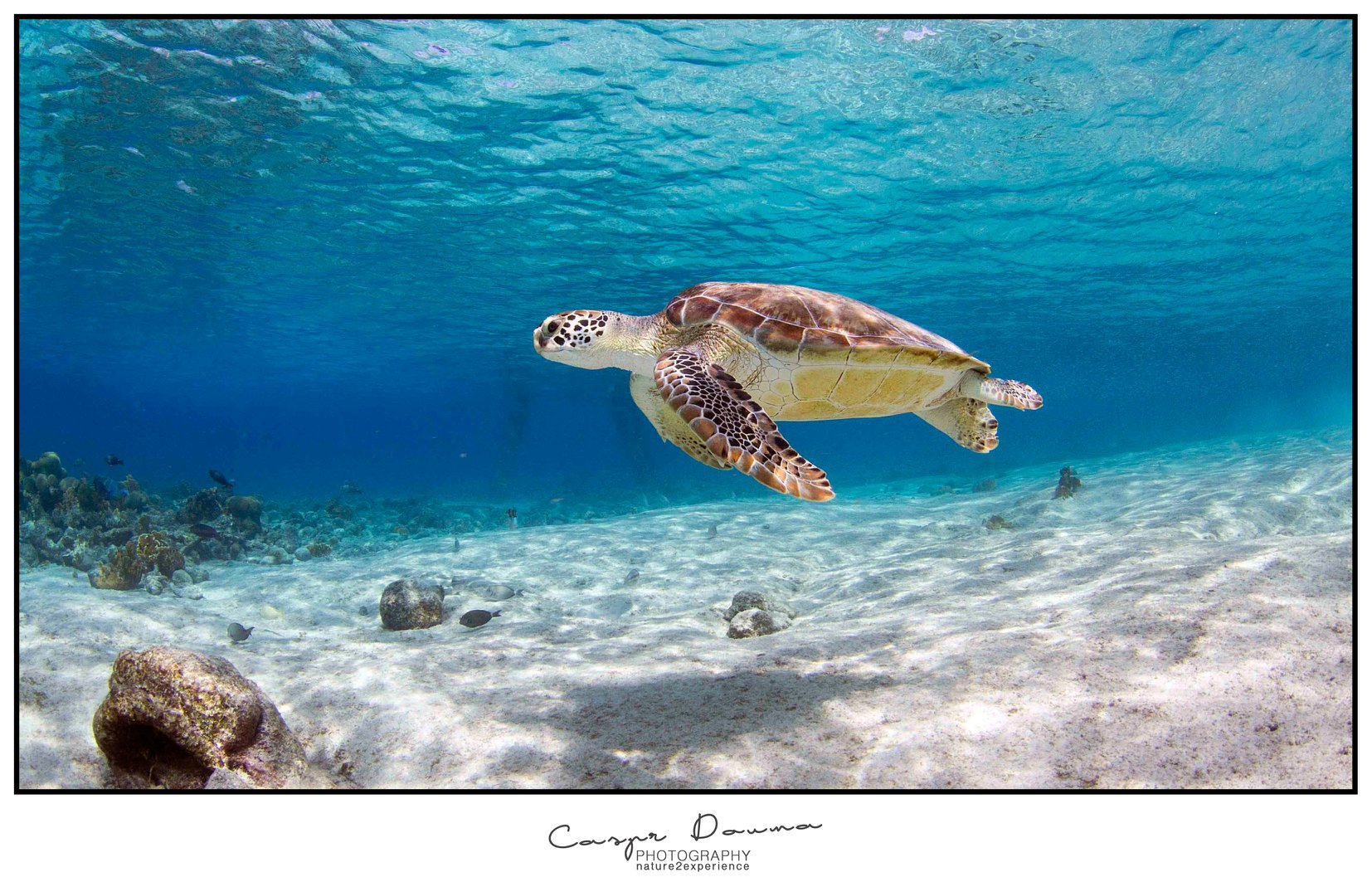 Zeeschildpad bij Zoutpier Bonaire