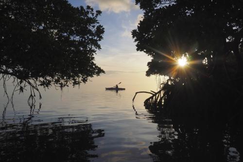 Kayak Mangrove Bonaire